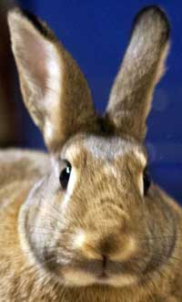 The Sacramento House Rabbit Society: Adoption, Behaviour, Care, and Education