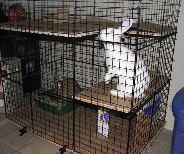 Petco Rabbit Hutches Precision Pet Extreme Rabbit Shack